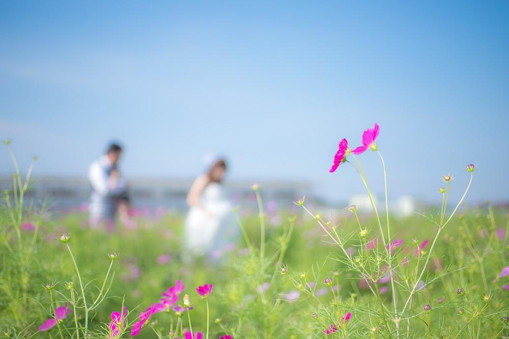 本日は知多の観光農園 花ひろばでのウェディング前撮り